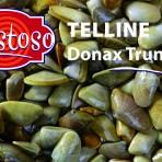 Telline – Live Donax Trunculus